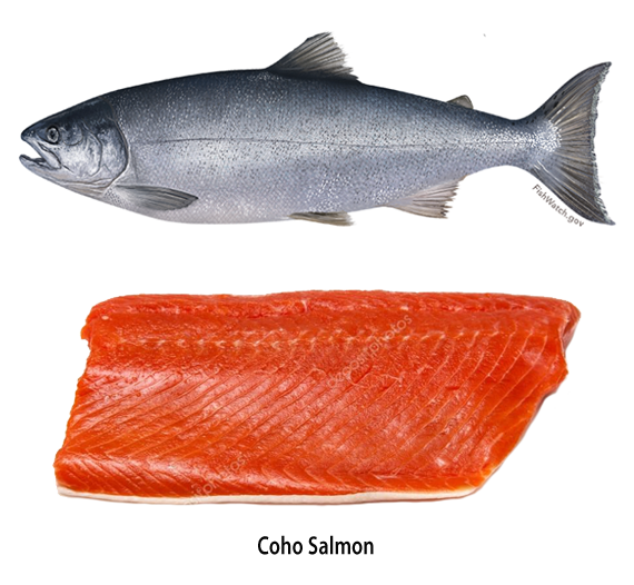 Canned Oregon Salmon